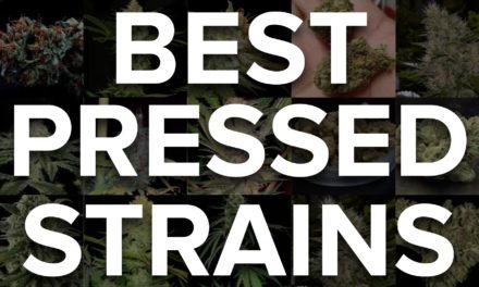 Rosin Major Keys: How to Choose the Best Strain for Rosin