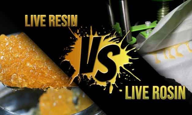 Live Rosin vs. Live Resin: What's the difference? + How to Make Live Rosin