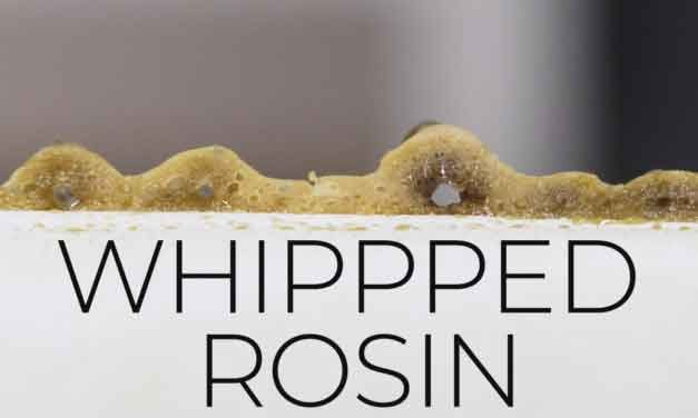 What is Whipped Buddha Rosin?
