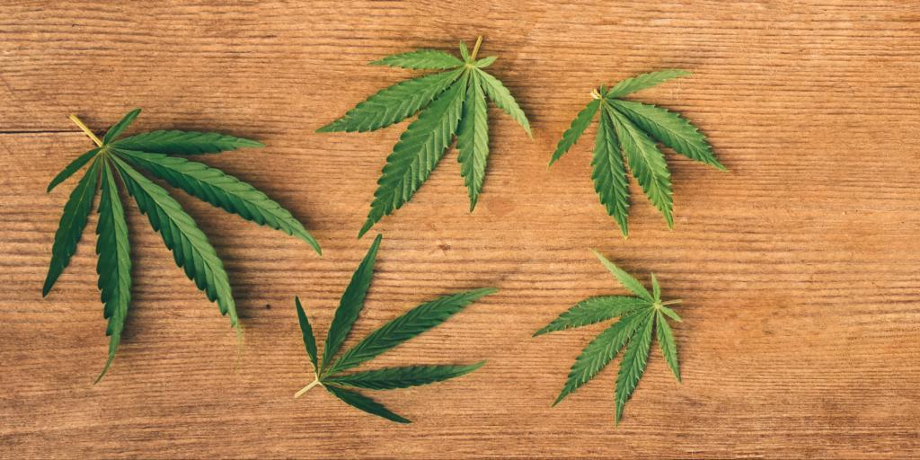 Cannabis Cannabinoids Trim