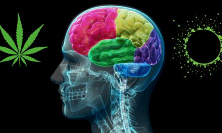 The Endocannabinoid System Explainer