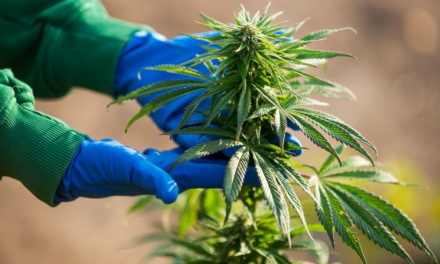 What Are Cannabis Strains?