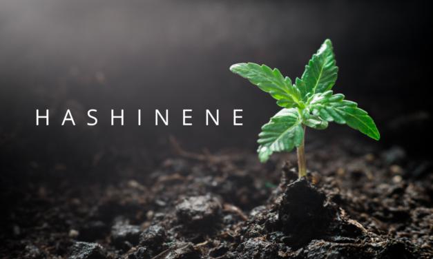 Hashinene: A Terpene Unique to Hash